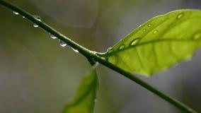 Åtskillig liten droppe av vatten på växten arkivfoton