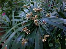 Åtskilliga blommor Royaltyfria Bilder
