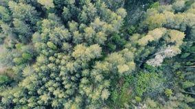 Åtskilliga kronor av skogträd i en sikt från över arkivfilmer