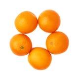Åtskilliga mogna apelsiner som arrangera i rak linje i en cirkel, rundar Arkivbild