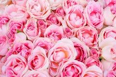 åtskilliga rosa ro för stor grupp Arkivfoto