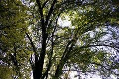Åtskilliga trädfilialer Royaltyfria Bilder