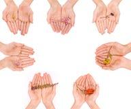 Åtskilliga uppsättningar av händer som rymmer försiktigt olika typer av blommor Arkivfoto