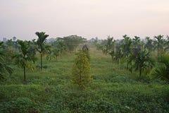 Åtskilligt croping system, durianfrukt att växa togatehr med arecamuttern royaltyfri fotografi