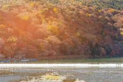 Åtskilligt färgträd för höstsäsong på bergflodframdel arkivfoton
