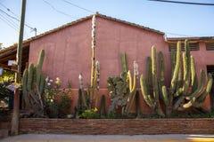 Åtskilligt rosa hus för kaktusträdgård royaltyfri bild