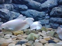 5条水族馆鱼 库存图片