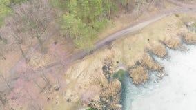 杉木落叶森林鸟瞰图在早期的春天 股票录像