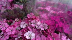 桃红色花和蜂