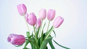 桃红色郁金香美好的boquet,百合科Lilieae球状药草,与绿色叶子 股票视频