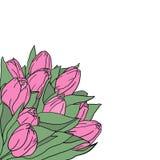 桃红色郁金香花卉背景与空间的您的文本的 招呼或喜帖的花构成 向量例证