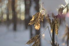 森林等待的春天 图库摄影