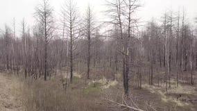 森林的鸟瞰图在火以后的 股票视频