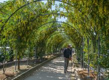 植物和花绿色自然隧道  免版税库存照片