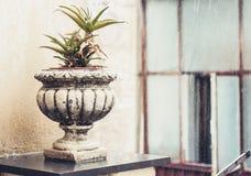 植物的装饰石罐一个历史建筑的大阳台的在卡塔尼亚,西西里岛,意大利,下雨天 免版税库存图片