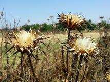 植物花干热的夏天 免版税库存图片