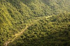 植被在河附近包括峡谷的倾斜的边 免版税库存图片