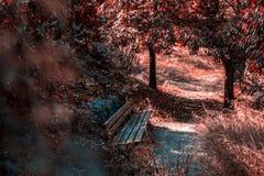 椅子在秋天森林里 免版税库存图片