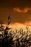 橙色日落沿海草丛林 免版税库存照片