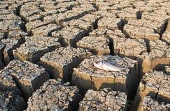 死的鱼特写镜头在一个干空的水库或水坝的由于夏天热浪、低降雨量、污染和天旱在北部 免版税库存图片