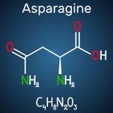 氨羰基丙氨酸L氨羰基丙氨酸,Asn,N氨基酸分子 它is is在蛋白质生物合成使用了  结构化学制品 向量例证
