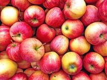 水多的红色苹果背景 免版税库存照片