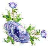 水彩在白色隔绝的银莲花属花束 库存照片
