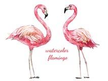 水彩动物-火鸟 免版税库存照片