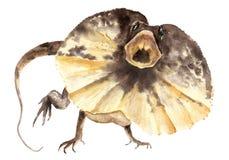 水彩图画动物-褶边蜥蜴,Chlamydosaurus kingii 向量例证