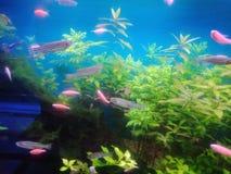 水族馆鱼2 库存图片