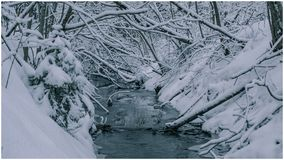 水移动通过森林 库存图片