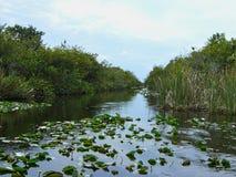 沼泽地在佛罗里达 免版税图库摄影