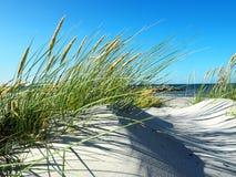 沙丘和海草在Blatic海 库存照片