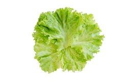 沙拉叶子 背景查出的莴苣宏观工作室白色 Brot 免版税库存图片