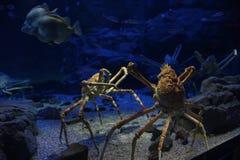 深海螃蟹 免版税图库摄影
