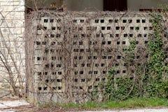深灰水泥外部墙壁由积木做成完全地长满与密集的干燥履带牵引装置植物在被放弃的餐馆 库存照片