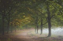 渐增音量在叶子下的早晨薄雾对道路在与捉住第一阳光的秋叶的Amerongse猜错 图库摄影