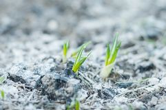 温暖为植物的春天 免版税库存图片