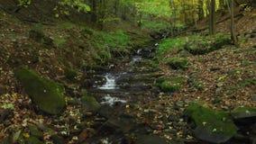 清楚的水小河在一条山小河的在秋天 股票视频