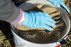 渔夫手套过滤诱饵通过筛子入桶 免版税图库摄影