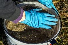 渔夫手套过滤诱饵通过筛子入桶 库存图片