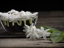 漂浮在木背景的清楚的玻璃的茉莉花 图库摄影