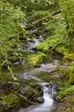 有小河的绿色森林在Muniellos生物圈储备,阿斯图里亚斯 库存照片