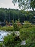 有厚实的草的一个岸的小湖和森林 免版税库存图片