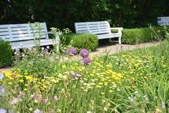 有公园长椅的金黄延命菊春黄菊属tinctoria庭院和花圃  图库摄影