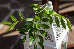 有植物的大烛台 免版税库存照片