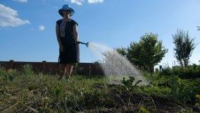 有浇灌她的庭院的一种园艺技能的爽快妇女在夏天在slo mo 股票视频