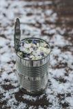 有春天花的金属罐头 免版税库存图片