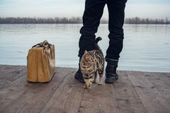 有手提箱和猫的人 图库摄影