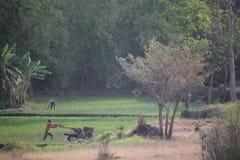 有拖拉机的稻田农夫 图库摄影